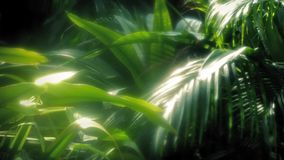 Deep In The Rainforest stock footage