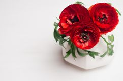 Deep red flower bouquet in elegant vase closeup on white wood background. Festive summer decor for interior. stock image