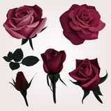 Deep Red Realistic Roses Vector Clip Art vector illustration