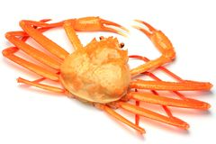 Deep red snow crab Stock Image