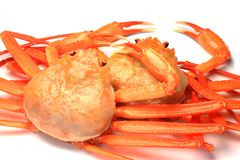 Deep red snow crab Royalty Free Stock Images