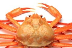 Deep red snow crab Royalty Free Stock Photos