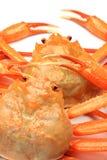 Deep red snow crab Stock Photos