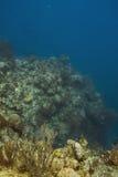 Deep reef Stock Photo