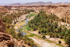 Deep river canyon with palm trees, Morocco Stock Photos