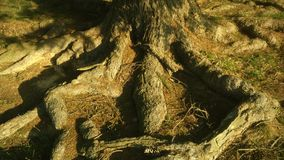 Deep roots Royalty Free Stock Photo