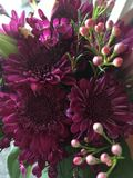 Royale Purple Flowers. These deep Royale purple mums are lovely for any occasion Stock Images