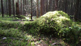 Deep russian forest. stock footage