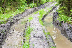 Deep rutted road through the forest Stock Images