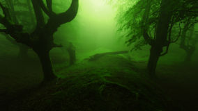 Deep scary forest. With gloomy trees silhouette Stock Images