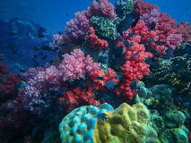 Deep sea and coral reef, colorful corals in ocean landscape Stock Photography