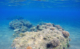 Deep sea and coral reef landscape. Coral reef animals. Stock Photography