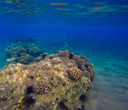 Deep sea and coral reef landscape. Coral reef animals. Sea ecosystem. Fresh corals at the bottom of the sea. Oceanic view from underwater. Seashore diving or Stock Photos