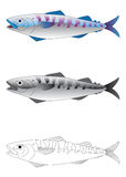 Deep sea fish vector illustration. Deep sea fish in colour, greyscale and outline vector illustration vector illustration