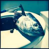 Deep sea fishing. Caught fish on a deep sea fishing boat Royalty Free Stock Photography