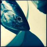 Deep sea fishing. Closeup of a caught fish on a deep sea fishing boat with a blue tone Stock Photography