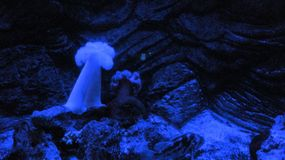 Deep Sea Life. Under a black light Royalty Free Stock Photography