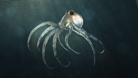 Deep sea octopod Royalty Free Stock Images