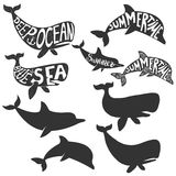 Deep sea. Summertime. Dolphin and whales silhouettes with letter Royalty Free Stock Images
