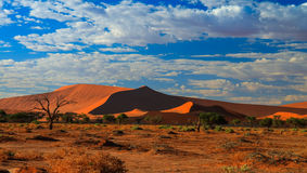 Deep shadows on Sossusvlei dunes at sunrise Namib desert Namibia Royalty Free Stock Photography