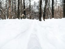 Deep ski track in fresh snow at snowy meadow. Deep ski track in fresh snow at snow-covered meadow in city park royalty free stock photo