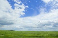 Deep sky. Meadow and Blue sky Royalty Free Stock Photo