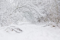 Deep snow. Small path in forest with deep snow Royalty Free Stock Photos
