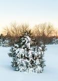 Deep snow in drifts cover fir tree Stock Photo