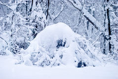 Deep Snow on fallen branches Stock Photography