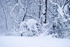 Deep Snow on fallen branches Royalty Free Stock Photos