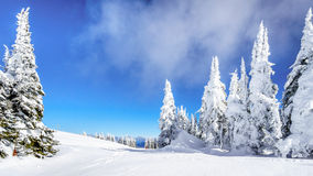 Deep Snow Pack and Snow Covered Trees in the High Alpine Royalty Free Stock Photo