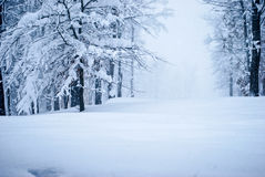 Deep Snow During Snow Storm Royalty Free Stock Images