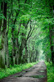 Deep spring green forest Stock Image