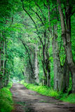 Deep spring green forest Royalty Free Stock Image