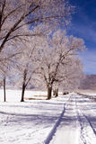 Deep Springs Ranch Road. Snow coats trees and a rural road in the Inyo Mountains Stock Photos