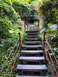 Deep in Taroko - the trail with very high stairs stock photo