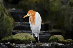 Deep thinking stork. Stock Photo