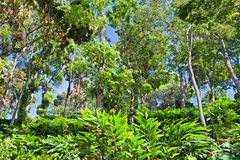 Deep tropical forest Stock Image