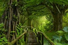 Deep Tropical Jungles Stock Images