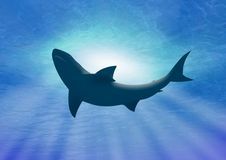 Deep under water shark. Shark swimming under deep blue water with sun light passing through Royalty Free Stock Images