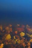Deep underwater Royalty Free Stock Image