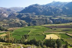 Deep valley Colca Canyon, Peru Stock Photography
