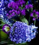Deep violet hyacinthus orientalis Royalty Free Stock Photo