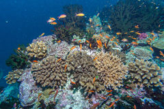 Deep Water Coral Reef Stock Photo