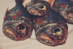 Deep-water fish Stock Image