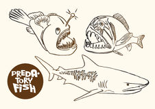 Deep-water predatory fish contour sketch vector ep. Contour sketch vector eps illustration of deep-water predatory fish: shark, anglerfish and saber Stock Images