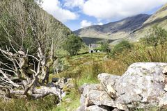 Abandoned Cottage Behind Tree and Rock. Deep in the West Kerry countryside is the remote Black Valley, named as such as it was the last place in Ireland to get Royalty Free Stock Image