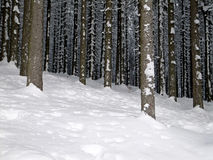 Deep winter forest Stock Photo