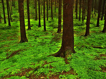 Deep wood. In summer period Stock Images