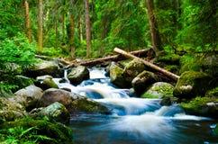 Deep wood. Photo taken in South Czech Republic (Šumava stock photos